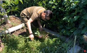 Trường Vũ tự hái rau, khoe vườn nhà rộng rãi bên Mỹ