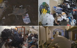 Bên trong căn hộ nhiều rác nhất Anh quốc: Chuột vào rồi đành bỏ mạng vì không có đường ra