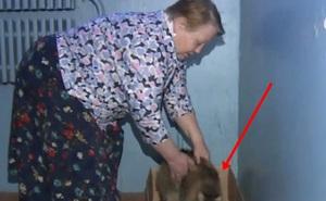 Đêm nghe mèo hoang kêu, cụ bà xuống chân cầu thang thì ngỡ ngàng với hành động của con vật, nhờ đó mà cứu được một mạng người