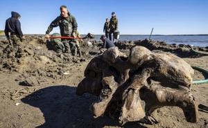 Băng tan tại Bắc Cực để lộ hài cốt voi ma mút 10.000 năm tuổi vẫn còn nguyên gân và da