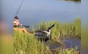 Video: Bị ngao kẹp vào chân, đại bàng sà xuống mạn thuyền cầu cứu
