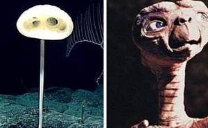 Phát hiện loài bọt biển ET trong 'Khu rừng kỳ dị' ở Thái Bình Dương trông giống như một sinh vật ngoài hành tinh