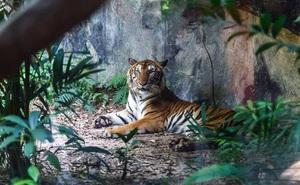 Làn sóng tuyệt chủng động vật đang tăng tốc