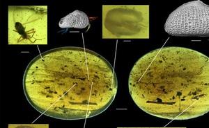 """Trong miếng hổ phách này là tế bào tinh trùng khổng lồ to hơn cả """"khổ chủ"""", lâu đời nhất thế giới động vật với niên đại 100 triệu năm"""