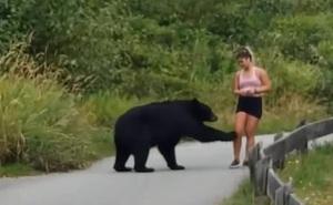 Gặp cô gái chạy bộ trên đường, gấu đen từ trong bụi rậm đi ra... sờ chân!