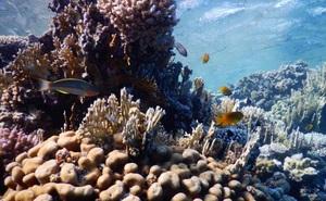 Tia cực tím giúp sinh vật biển xác định thời gian trong năm