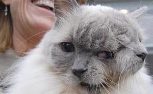 """Chú mèo 2 đầu trông như photoshop nhưng khiến nhân loại há hốc với khả năng sống sót và loạt sự vụ có thật nhưng ai cũng nghĩ là đồ """"pha ke"""""""