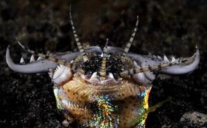 Hàng chục triệu năm về trước, một loài sâu ăn thịt dài 2m từng lang thang dưới đáy biển