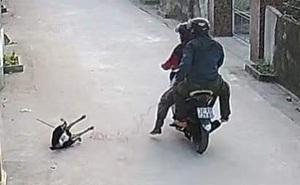 """CLIP: Người dân bất lực nhìn 2 thanh niên đi xe máy """"cướp chó"""" giữa ban ngày"""