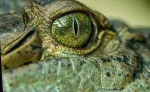 'Vua đầm lầy': Nỗi kinh hoàng của Trái đất hàng triệu năm trước