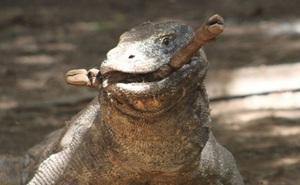 Top 10 sự thật đáng ngạc nhiên về rồng Komodo