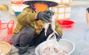 Từ loài cá rẻ tiền không ai mua trở thành đặc sản đắt đỏ ngày giá rét