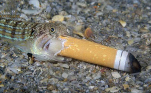Bức ảnh 'Cá hút thuốc' gây tranh cãi đoạt giải thưởng Nhiếp ảnh Đại dương