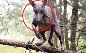 Camera giám sát ghi lại hình ảnh con vật kỳ lạ, anh chàng đăng Facebook, dân mạng đưa ra 1 đáp án lạnh gáy