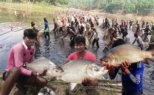Cả trăm dân làng thi nhau lao xuống ao nước, tại sao họ lại làm như vậy?