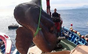 """Ra khơi đánh cá ngừ, ngã ngửa khi câu được """"thủy quái"""" trông như từ thời tiền sử"""