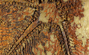 Phát hiện bất ngờ từ sinh vật 5 tay, 480 triệu tuổi niêm phong trong đá