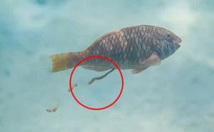 Khoa học vừa làm một nghiên cứu với đối tượng 'quái đản' nhất đại dương, và đây là lý do tại sao