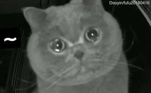 Để mèo ở nhà một mình rồi về quê ăn Tết, chủ nhân vội vã quay lại khi nhìn thấy cảnh tượng khó tin trong camera