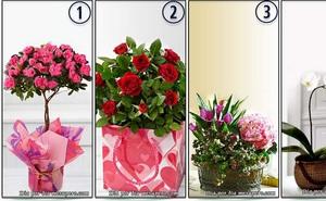 """Hãy chọn một bó hoa muốn tặng bạn gái ngày 8/3 để hiểu """"thông điệp ngầm"""" nóng bỏng bạn muốn trao tới nàng là gì"""