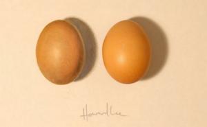 Thách thức thị giác 5 giây: Đố bạn phân biệt được đâu là quả trứng thật và đâu là quả trứng giả