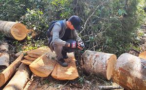 Bốn trưởng ban quản lý rừng phòng hộ đồng loạt bị tạm đình chỉ