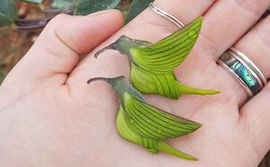 Kỳ lạ loài hoa được gọi là 'chim' - xinh đẹp lạ lùng, là thảo dược tốt