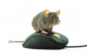 Vì sao chuột máy tính lại được gọi là... 'chuột', thay vì tên của một loài động vật khác?