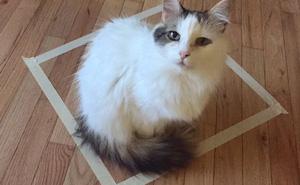 Những con mèo thích hộp, và chúng thích cả ảo giác về những chiếc hộp