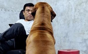 Bị bà chủ quên không cho ăn cơm, chú chó khổng lồ lập tức tìm ông chủ mách tội, bộ dạng nhìn đã thấy buồn cười