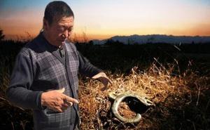 Người nông dân nhặt được cái móc câu kỳ lạ, đem giao nộp cho nhà nước - 13 năm sau, các chuyên gia lại tìm đến!