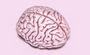 Não bộ và tinh hoàn có điểm chung gì? Một nghiên cứu mới tìm thấy sự tương đồng đáng ngạc nhiên giữa chúng