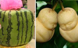 """6 loại trái cây có tiền cũng chưa chắc mua được trên thế giới, nhìn thì """"đẹp mắt"""" nhưng hương vị sẽ ra sao?"""