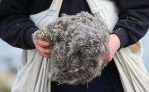 Tìm hiểu về loài vịt biển sở hữu bộ lông đắt nhất trên thế giới, hàng ngàn đô la mỗi kg