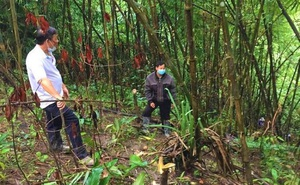 Phát hiện thi thể trơ xương giữa rừng vắng Đắk Nông