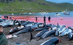 Cảnh chết chóc kinh hoàng trên bãi biển nhuộm đỏ máu của 1.400 con cá heo: Ngỡ thảm họa thiên nhiên nhưng nguyên nhân từ chính con người