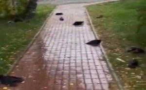 Đường phố la liệt hàng trăm xác động vật chết, dân làng kinh hãi chứng kiến hiện tượng chưa từng có trong gần 50 năm