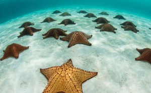 Những khoảnh khắc ấn tượng cho thấy thế giới đại dương đầy thú vị