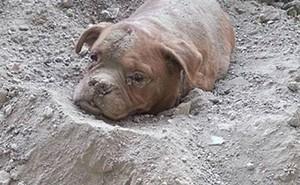 24h qua ảnh: Chú chó bị chủ chôn sống khiến dư luận phẫn nộ