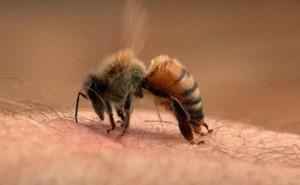 Hải Phòng: Nhiều người tử vong vì bị ong đốt