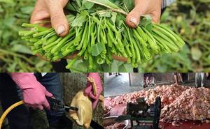 """""""Họ đang hiểu nhầm về """"thực phẩm sạch"""". Rẻ thì người sản xuất chỉ có chết"""""""