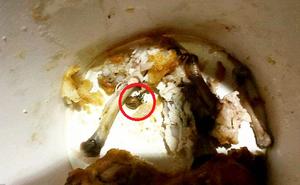 """Gà rán KFC """"tẩm ướp gia vị lạ"""" khiến thai phụ ở tháng thứ 7 ngộ độc suốt ba ngày"""