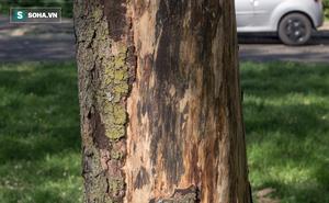 Thân cây này có vẻ vô hại nhưng bạn có thể mất mạng nếu chạm vào nó!