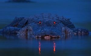 Rơi vào hàm cá sấu, người cha làm được điều phi thường để cứu mình và 2 con gái