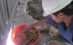 Quảng Bình: Một gia đình phát hiện 187 bộ hài cốt trong vườn nhà