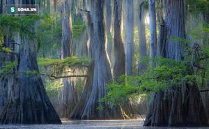 15 cây tự nhiên đẹp nhất thế giới khiến bạn ao ước được nhìn ngắm tận mắt