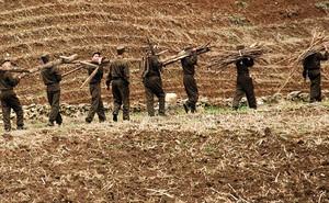 """Triều Tiên """"nghỉ"""" phóng tên lửa 2 tháng vì binh sĩ bận... thu hoạch nông sản?"""