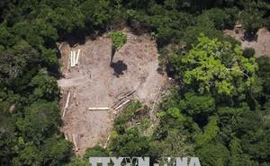 'Lá phổi' Amazon đang bốc cháy, 1/5 diện tích bị huỷ hoại từ năm 1970 đến giờ