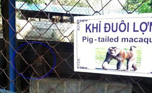 """Cận cảnh thú nuôi bị coi là """"ngược đãi"""" tại vườn thú Công viên nước Củ Chi"""