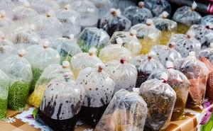 Túi nilong – Dùng sao để không bị nhiễm độc?